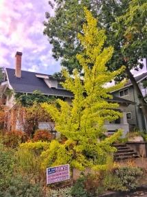 Portland2-58