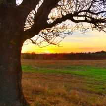 lovech-provence-farmland