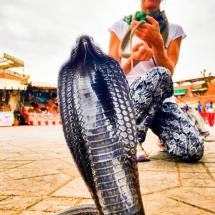 medina-snakes-1