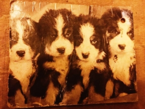 postcard-of-puppies