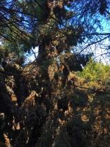 Butterflies covering tree