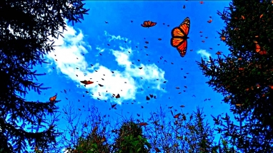 Butterflies in the sky3