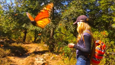 Butterfly in the lense