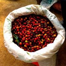 Jardin Coffee Cherries