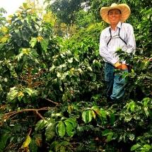 Jardin Coffee Fields
