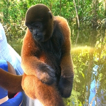 Monkeys Martina
