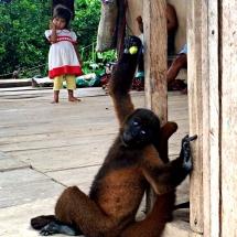 Woolly monkey in village