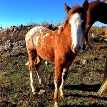 Foal on the ranch
